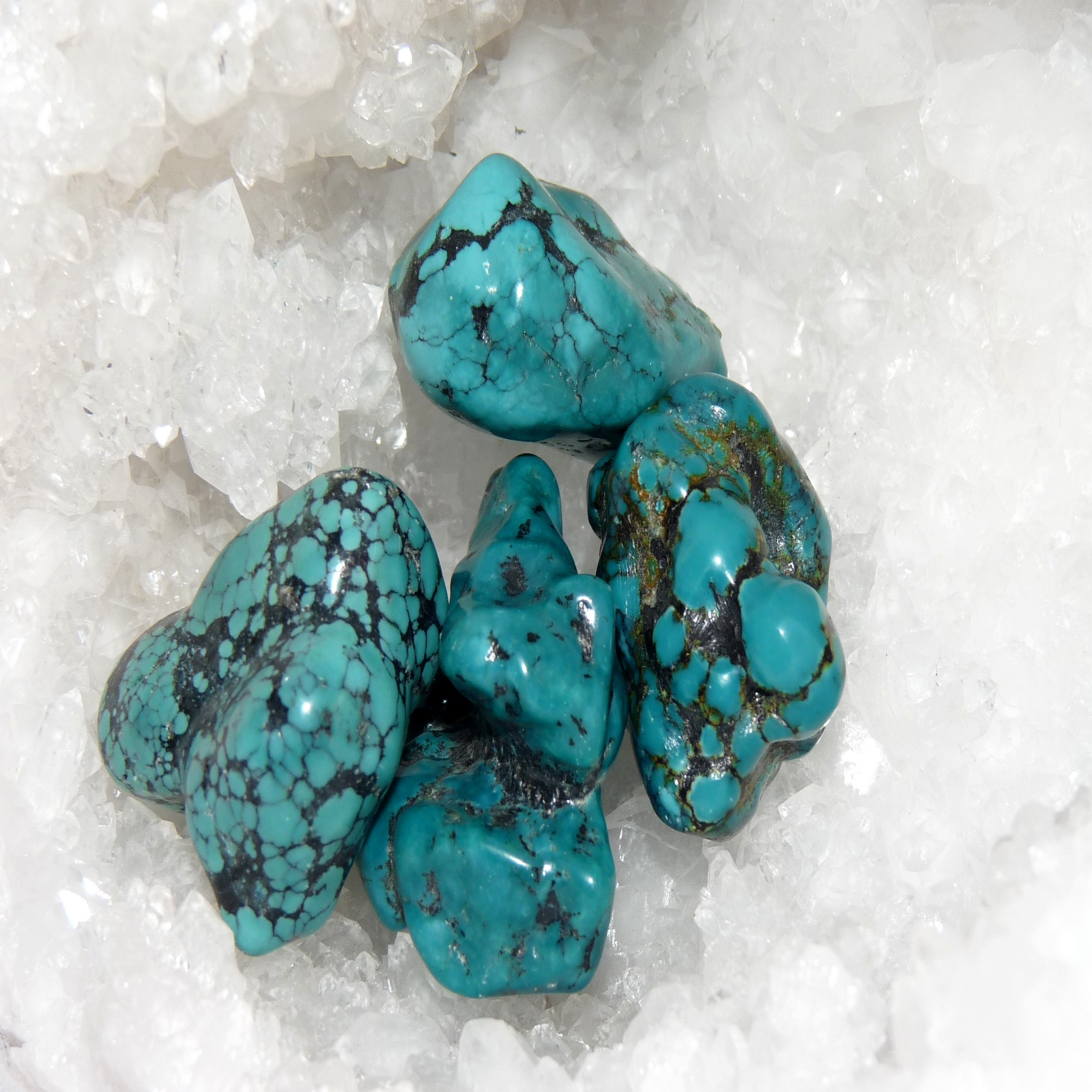 Turquoise (2)